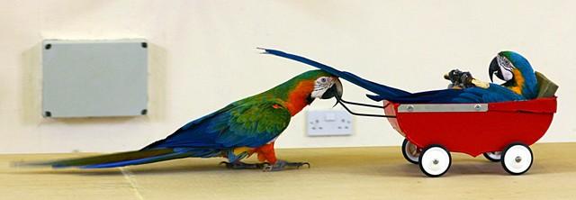 pafos_bird_park_show.jpg