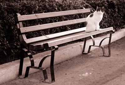 Cat on the bench