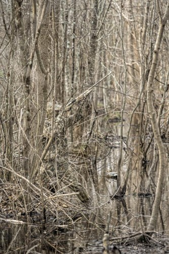 Realtree MAX-5 Timber