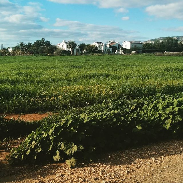 Pafos greens